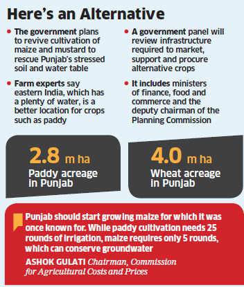 Government for crop diversification in Punjab to save soil, water