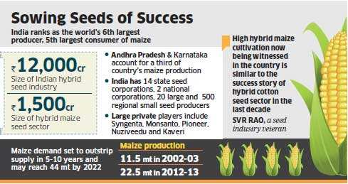 Hybrid maize seed market set to double in two years