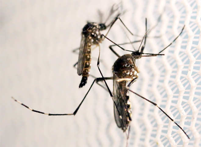 Zika threat continues, Brazil uses drones to combat virus