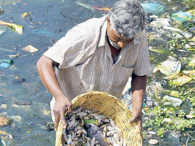 Bengaluru's Ulsoor Lake turns into fish graveyard: Is pollution plaguing water bodies?