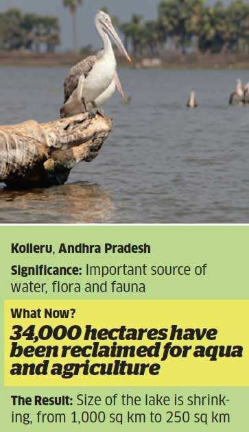 Vanishing wetlands: Indiscriminate development & poor regulation are wrecking a critical piece of India's ecology