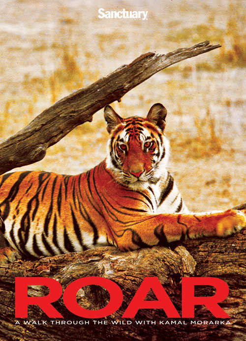 Ex-minister Kamal Morarka's book Roar: Asiatic lions, Indian tigers & the wild