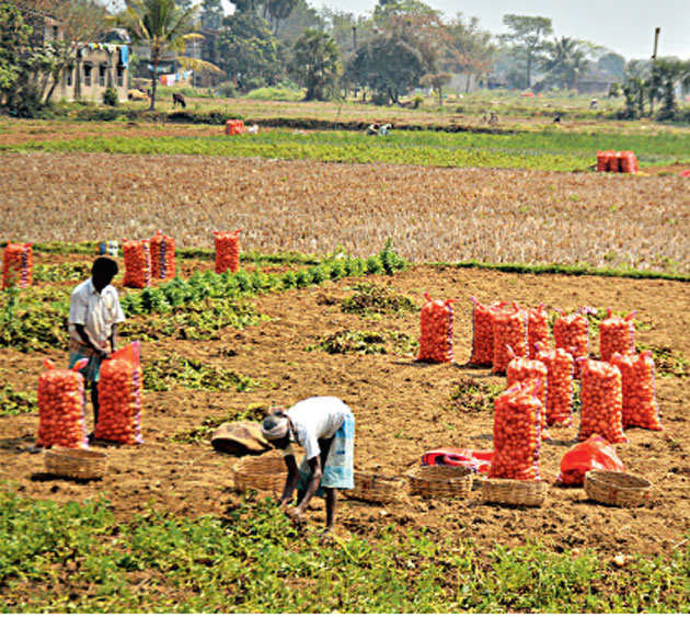 West Bengal: Overproduction of potato, rice lead to sharp drop in prices
