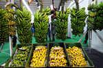 India is the world's leading 'banana' republic