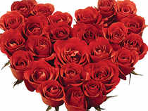 Rose business blooming in Pune-Talegaon