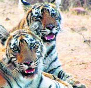 The Forest Department thinks that the queries reflect a bigger plan for land grab in the area by creating the bogey of a tiger reserve destabilising lives in the neighbourhood.