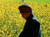 With favourable weather and a higher acreage, the country is likely to have a bumper mustard production this year. This will put pressure on seed and oil prices which have already softened due to a drop in palm oil prices.