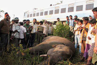 Onlookers gather around an elephant that was killed by a passenger train in a forest area near Rambha railway station, about 180km south of Bhubaneshwar on Sunday. (AP Photo)