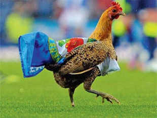 Venky's, the Pune-based poultry giant that owns Blackburn Rovers, is the worst owner of an English football club, according to a new survey