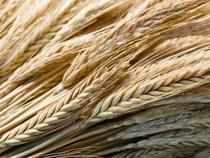 At present, below poverty line families effectively get 7 kg of wheat at 4.15 a kg and rice at 5.65 per kg, per month.