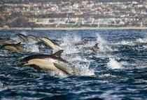 As per estimation carried out in 2013 there had been an increase in population by 4.6 per cent compared to last year, he said adding the number of dolphins last year was 145.