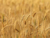CCEA rejects food ministry's proposal to cut wheat prices sold under the open market sales scheme (OMSS) to biscuit makers, flour millers and other bulk buyers.