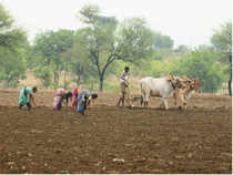 The share of agriculture and allied sectors in India's GDP is likely to decline to 13.7 per cent in 2012-13.