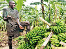 The scope for Indian companies and Indian expertise to vastly accelerate African nations' economic growth is huge — in particular, the potential to use Africa's vast expanses of cultivable land to meet the world's growing demand for farm produce.