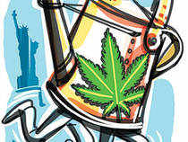 on Wall Street, numerous small-cap volatile marijuana stocks have been making moves that are being noticed by investors interested in profiting off this industry.