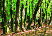 The UPA has given clearance to cut a whopping six lakh hectares of forests — of these more than 2.5 lakh hectares were for mining — since it came to power in mid-2004.