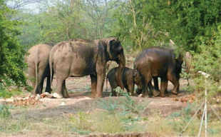 According to forest department sources, there have been 298 elephant deaths in Sathyamangalam between 1999 and 2010. Of these, 107 were in the period from 2008 to 2012.