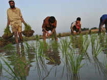 Zilla Krushak Kalyan Manch fears distress sale of paddy in Koraput district of Odisha as the administration has closed procurement centres for two days.