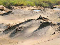 Taking suo motu cognisance of allegations of illegal sand mining in coastal Kerala, NHRC asked the state government to file a report within two weeks.