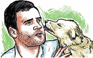 Animal lovers of the city are pledging their vote for Rahul Gandhi, after an animal shelter volunteer claimed to have spotted him giving a joyride to his adopted 'Indie' dogs.
