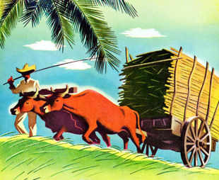 SABMiller: Peasant partnerships give it barley, farmers earn higher incomes