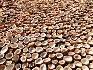 Earlier, Marico would buy only copra—coconuts sun-dried by its vendors. This migration from copra to coconut is significant