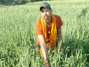 Wheat production this year is likely to surpass the previous record of 94.88 MT on better coverage and good weather conditions,  Tariq Anwar said.