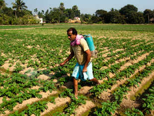 """This huge crop loss could be attributed to low pesticide consumption in India,"" said the joint study by industry body Assocham and Yes Bank."