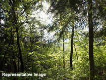 The MoEF's new procedure for identifying forests which can be given for mining is lax and likely to do a lot of harm.