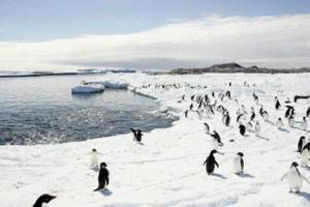 Penguin species in the Antarctic that once benefited from rising temperatures are now in decline due to warming gone too far, scientists said.