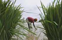 A hit to agriculture will have a direct impact on India's $2-tn economy and cos that depend directly or indirectly on the farm sector and rural consumption.