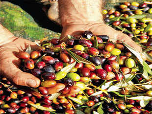 Global production in the season through September will be the least in 15 years, the Madrid-based International Olive Council estimates.