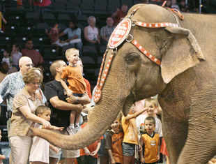 Bowing to criticism from animal rights groups, the Ringling Bros and Barnum & Bailey Circus announced yesterday it will phase out use of their emblematic Indian stars. (AP photo)