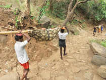 Seeking basic amenities at Sadhuragiri hills, pilgrim centre on the Western Ghats and to remove unauthorized structures at the hills two different writ petitions were filed.