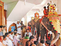 Every year, before they set out for the annual pilgrimage, the devotees take to abstinence of all sorts — in their diet and in their conjugal life.