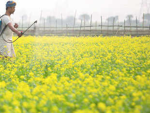 The much-debated issue of GM mustard will be discussed tomorrow at a meeting of the Genetic Engineering Approval Committee (GEAC), the apex body for the regulation of such food products.