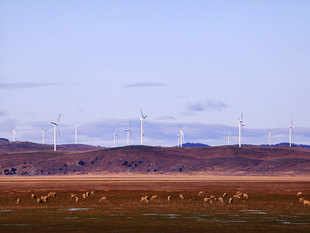 Investment in renewable sources of energy, such as wind and solar, was 4 per cent higher than 2014's revised figure of $315.9 billion.