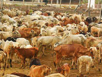 The new scheme has been proposed as at present out of 300 million bovines, only 85 million are milk producing, leaving large number of unproductive animals.