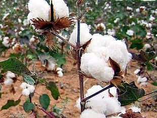 The government panel on cotton seed price control will meet on February 23 to recommend maximum price of cotton seeds.