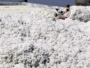 (Representative image) CICR in Nagpur has introduced Bt genes into 21 cotton seed varieties, which scientists say can be provided to farmers at 10 per cent of the price of hybrid seeds.