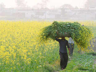 Budget 2016 focuses on addressing farm distress and ensuring that farmers' income gets doubled by 2022. For farmers in distress, 2022 seems a long time away.
