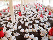 Kuwait has banned imports of poultry products from India in the wake of incidents of bird flu virus in some states.