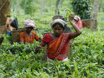 India's tea exports to Pakistan rose by 60 per cent to Rs 160.82 crore in the first 10 months of the current fiscal.
