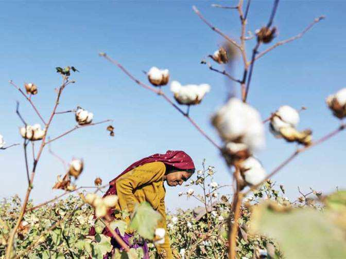 GM crops  Government should set up an independent regulator at the