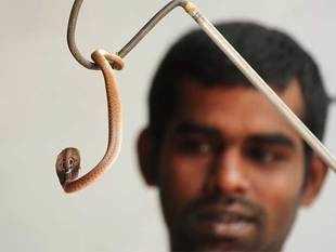 snake catching training in bangalore dating