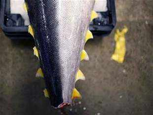 Histamine, a food-borne toxin, is formed as a result of time and temperature abuse of certain fish species that can cause illness to consumers.