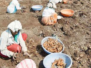 Arvind Kejriwal to release farmers' manifesto at Moga on September 11