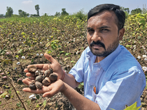 Yogesh Shelke planted cotton in 10 acres but the rains have damaged most of the crop.