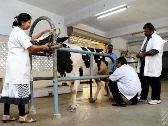 research papers cow urine Effect of cow urine on wound healing property in wister through extensive research in the fact that cow urine costs more than milk product of.