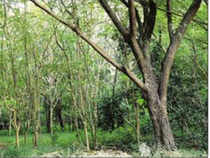 tree_bcccl